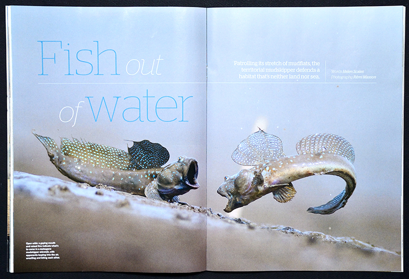 BBC Wildlife magazine Rémi Masson fish japan