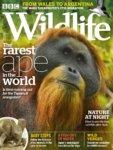 BBC wildlife Rémi Masson
